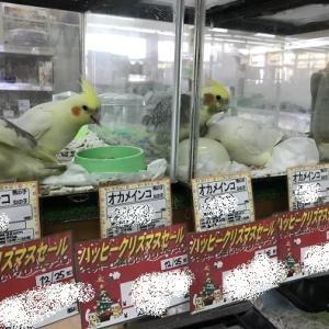 12/14 セールがじわじわ開始!?