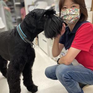 「よりそイズム」と大型犬
