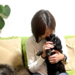 子犬のハウストレーニング 〜ラフラ編〜【動画】
