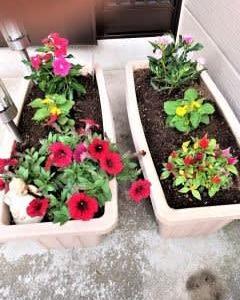 花の植替え