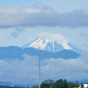富士山とお花