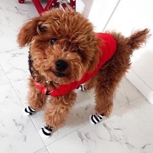 シマシマ★靴下♪