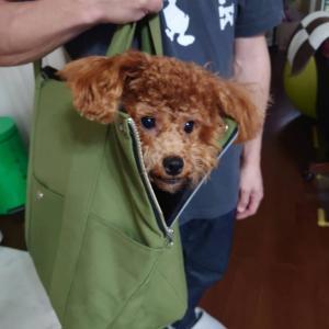 DOG★BAG