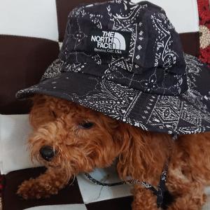 ノースフェイスの帽子(・ω・)/