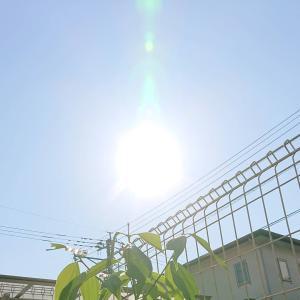 今朝の光★