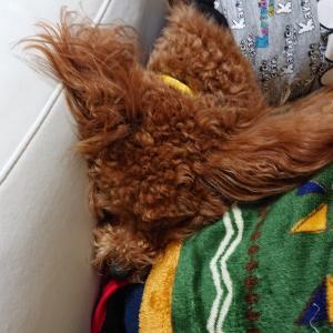 今日は犬の日★ワンワンワンワン