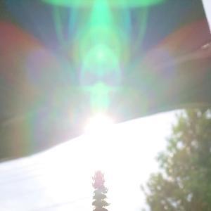 今日の太陽の光★