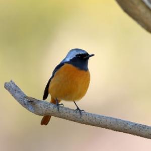 綺麗な鳥(子)