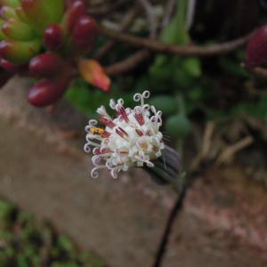同じようなお花。。。アーモンドネックレスsan 三日月ネックレスsan