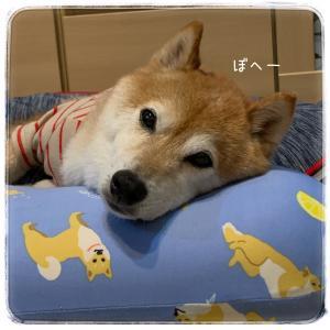 枕を使いこなしてるよ!