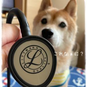 お誕生日プレゼントは聴診器だよ!