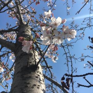 春はバタバタ