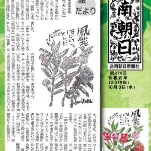 『わが家の草花⑧ホウセンカ』