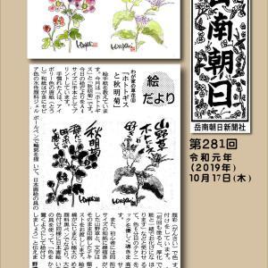 『わが家の山野草⑧ ホトトギスと秋明菊』