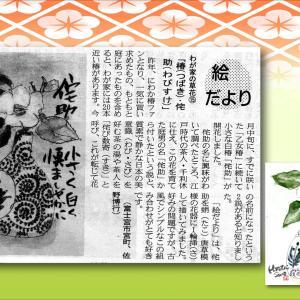 『わが家の草花⑮ 椿・侘助』