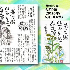 『わが家の草花⑳ 母子草』