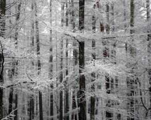 雪景色&営業時間の短縮要請