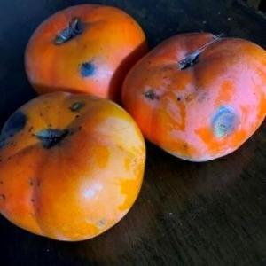 ひょうの動画と柿