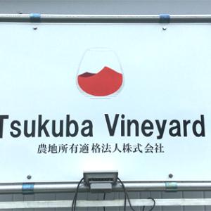 筑波山の麓、広大なワイン葡萄畑にLoRaWAN土壌センサを設置 -  Tsukuba  Vineyard