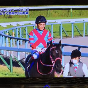 菊花賞・3連単8740円的中でGI・天皇賞(秋)へ!