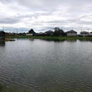 エリアトラウト 関根養魚場