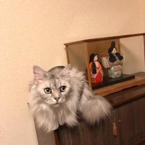 とよのあかりを祝う猫