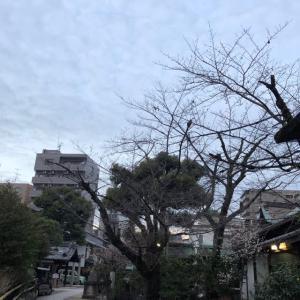梅の盛りの天神社