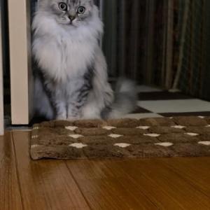 壁に槣って後ろ足を上げる猫