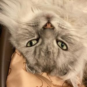 猫にカテキン、我に月桂樹