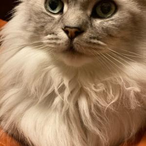 猫が殴るのは、敵の闘争心である