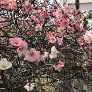 3月31日の開運ポイント&キラキラ星