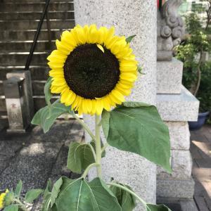 8月☆九星別ラッキーカラー!