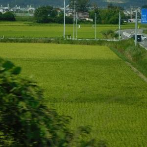 お米の種類により、各地により、いろいろね~♪