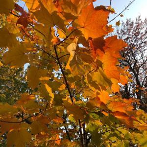 秋麗。街歩きに最高の時期です。
