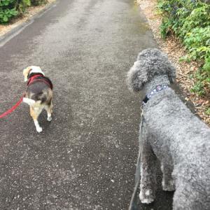 ステラちゃんとお散歩