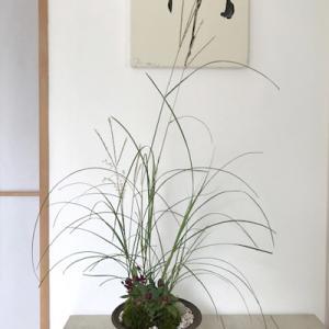 屋久島ススキの苔盆彩...