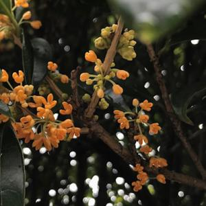 オレンジ色の小さなお花...