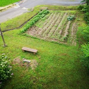 坂本分校裏の畑