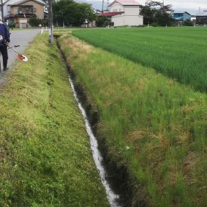 """午前5時から""""草刈り"""""""