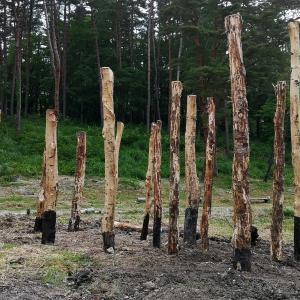 森のオブジェか?