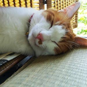 ネコのシエスタ