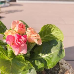 お花と看板娘