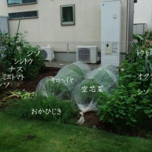 ガーデニング2019(家庭菜園まとめ)