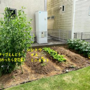 家庭菜園の記録(ガーデニング2020 ②)