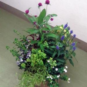 7月度のガーデニング教室は夏の寄せ植え弾2段!
