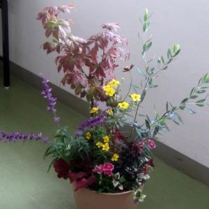 11月度のガーデニング教室は秋の寄せ植え