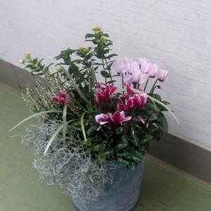 11月度ガーデニング教室は秋の寄せ植え第2回目