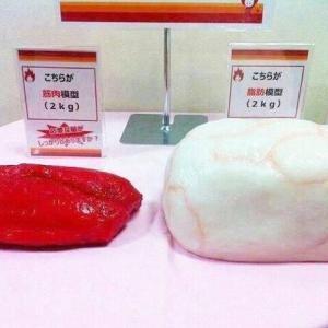 ダイエットは源平合戦!?