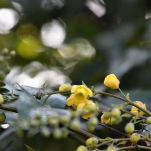 黄色の小さな集団