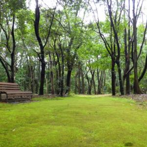自然のグリーンカーペット(初夏にベンチで居眠りできそう)